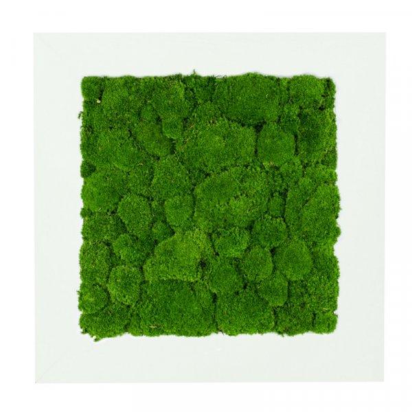 Mechový obraz v bílém rámu 2 - 56x56 cm