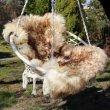 Ovčí kožešina 100% přírodní 90-100 cm muflon